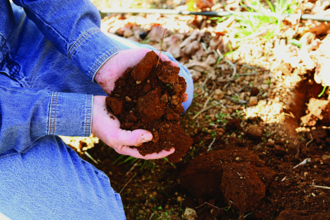 Hands holding dirt