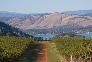 Vineyards, lake, and mountains