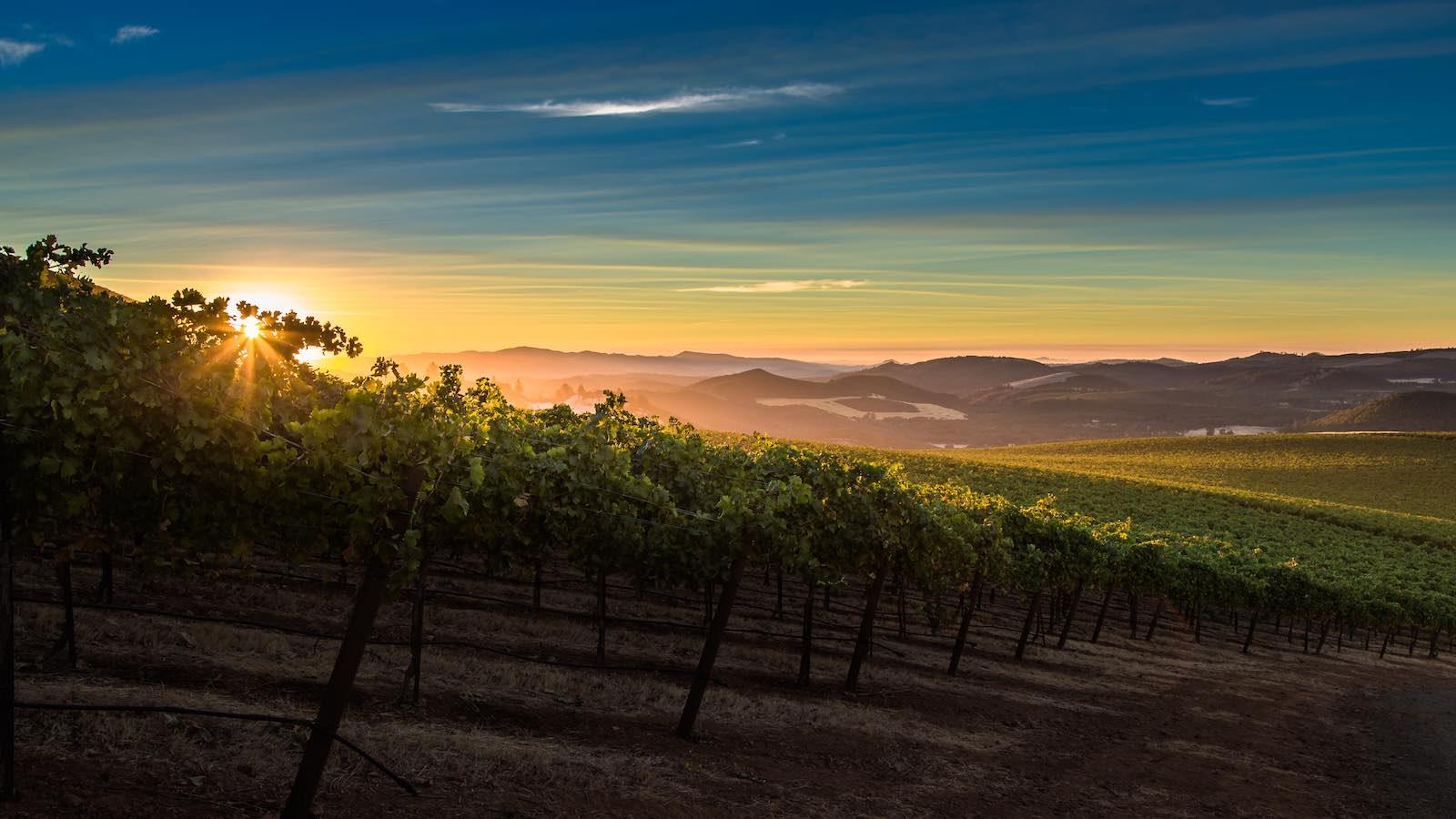 Beckstoffer Vineyards, Lake County, at sunset (c) Nathan DeHart